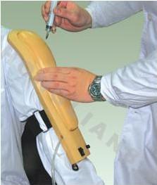 高级电子上臂肉注射训练模型