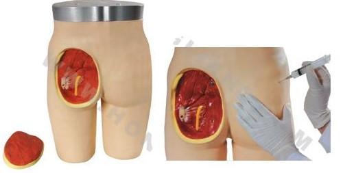 高级臀部肌内注射与解剖结构模型