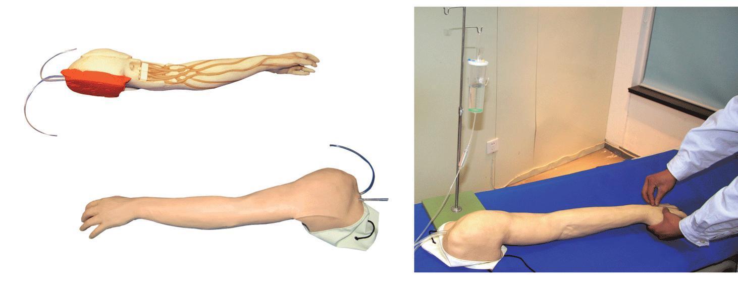完整静脉穿刺手臂模型