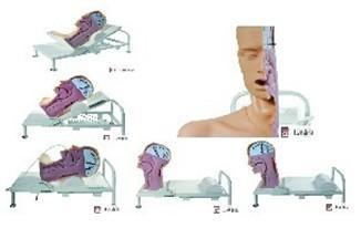 高级吞咽机制模型