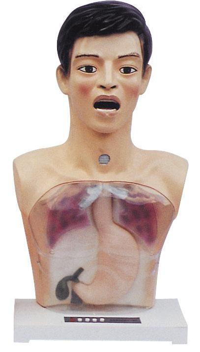 带警示透明洗胃机制模型