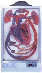 电动心脏搏动与血液循环模型-上海佳悦公司:021-63283651中国领先的医学教学模型设备制造厂家