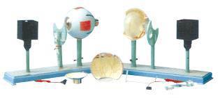 眼球仪是我公司自行研发生产热销的医学教学模型,欢迎各医院单位订购021-63283651