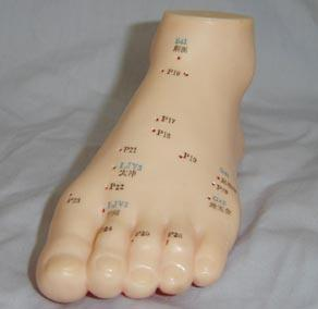 足针灸模型