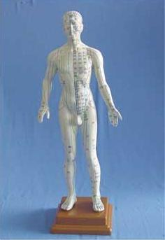 50CM人体针灸模型