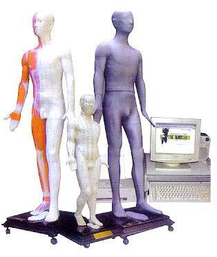 按摩点穴电子人体模型