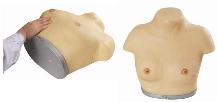 高级乳腺视诊与触诊模型