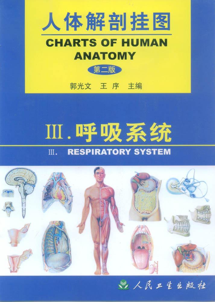 人体解剖挂图(呼吸系统)-上海佳悦公司:021-63283651 中国领先的医学教学模型设备制造厂家