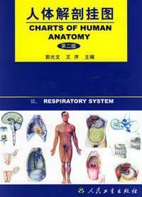 人体解剖彩色挂图(九大系统) -上海佳悦公司:021-63283651 中国领先的医学教学模型设备制造厂家