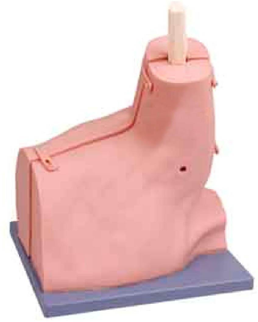 肩关节检查模型GD/LV77