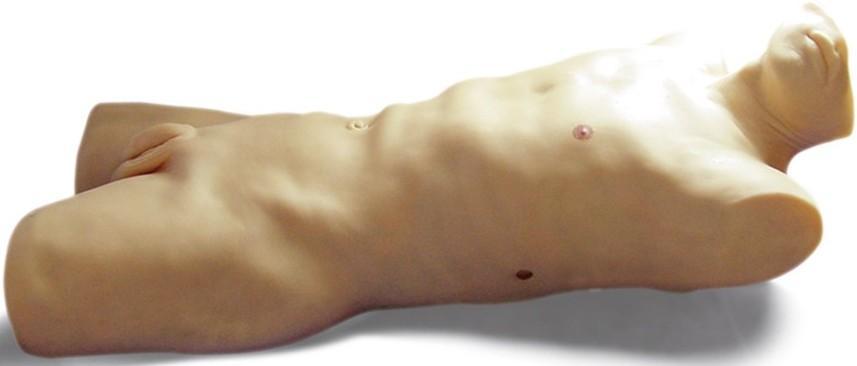 肝脓肿穿刺模型GD/L263
